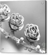 Silver Lining.... Acrylic Print