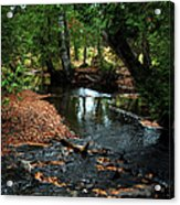 Silver River Channel In Autumn Acrylic Print