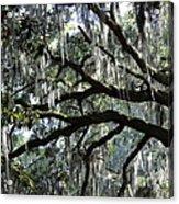 Silver Savannah Tree Acrylic Print