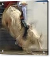 Silver State Stampede 2014 Bull Rider Acrylic Print