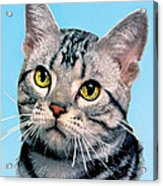 Silver Tabby Kitten Original Painting For Sale Acrylic Print