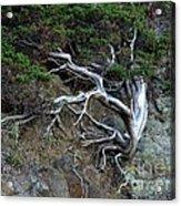 Silver Tree Acrylic Print