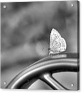Silver White Butterfly Acrylic Print