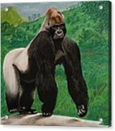 Silverback Gorilla Acrylic Print by David Hawkes