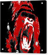 Silverback Gorilla Acrylic Print