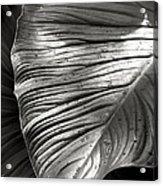 Silvertone Leaf Acrylic Print