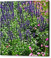 Simple Beauty - Purple And Pink Acrylic Print