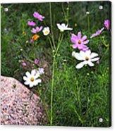Simple Flowers 11460 Acrylic Print
