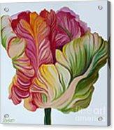 Simple Tulip Acrylic Print
