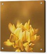 Simplistic Yellow Clover Flower  Acrylic Print