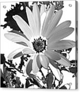 Simply Black And White Acrylic Print