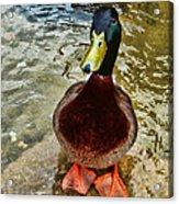 Simply Ducky Acrylic Print