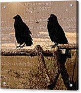 Singing Crows Acrylic Print