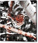 Singing In The Snowfall Acrylic Print