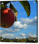 Single Apple Acrylic Print