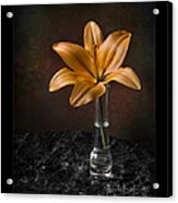 Single Asiatic Lily In Vase Acrylic Print