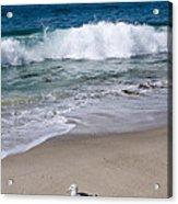Single Seagull On The Beach Acrylic Print