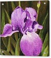 Single Iris Acrylic Print