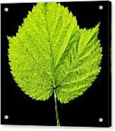 Single Leaf From Raspberry Bush Acrylic Print