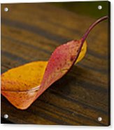 Single Leaf Acrylic Print