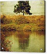 Single Pine Tree Acrylic Print by Carlos Caetano