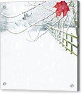 Single Red Leaf Acrylic Print