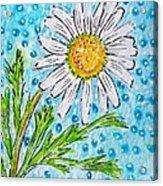 Single Summer Daisy Acrylic Print