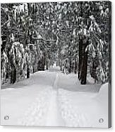 Single Track Cross Country Skiing Trail Yosemite National Park Acrylic Print