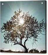 Single Tree Acrylic Print