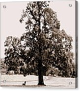 Single Tree Journey Acrylic Print