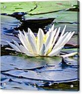 Single White Lotus Acrylic Print