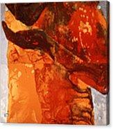 Sip Acrylic Print by Graham Dean