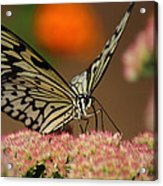 Sip Of The Nectar Acrylic Print