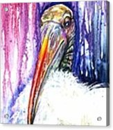 Sir Archibald Woodward Woodstork IIi Acrylic Print