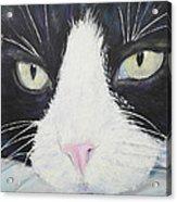 Sissi The Cat 2 Acrylic Print