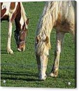 Sister Horses Acrylic Print