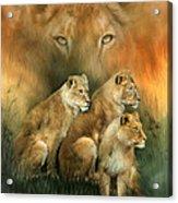 Sisterhood Of The Lions Acrylic Print