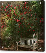 Sit With Me Here Acrylic Print by Laurie Search