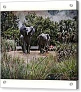 Sitting By The Elephants Acrylic Print