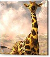 Sitting Giraffe Acrylic Print