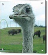 Six Flags Great Adventure - Animal Park - 121212 Acrylic Print