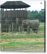 Six Flags Great Adventure - Animal Park - 121221 Acrylic Print