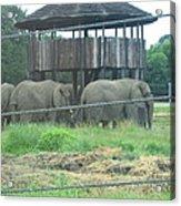 Six Flags Great Adventure - Animal Park - 121224 Acrylic Print