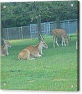 Six Flags Great Adventure - Animal Park - 121234 Acrylic Print