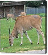 Six Flags Great Adventure - Animal Park - 121235 Acrylic Print