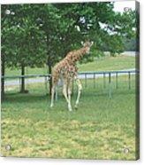 Six Flags Great Adventure - Animal Park - 121243 Acrylic Print
