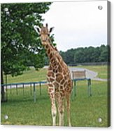 Six Flags Great Adventure - Animal Park - 121244 Acrylic Print