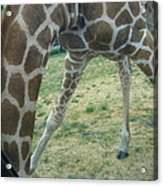 Six Flags Great Adventure - Animal Park - 121245 Acrylic Print by DC Photographer