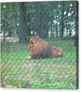 Six Flags Great Adventure - Animal Park - 121252 Acrylic Print