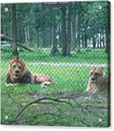Six Flags Great Adventure - Animal Park - 121253 Acrylic Print